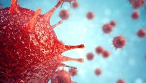 Koronavirüs zengin fakir dinlemiyor