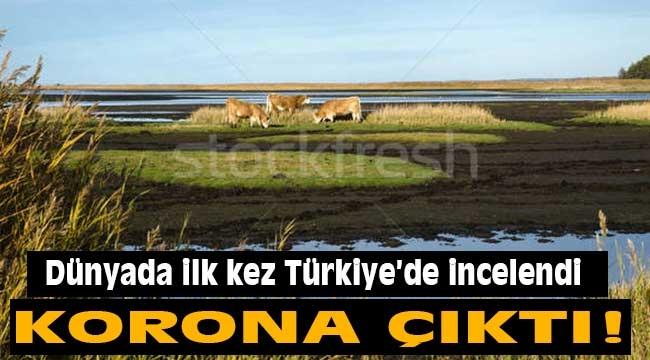 Dünyada ilk kez Türkiye'de incelendi: Korona çıktı