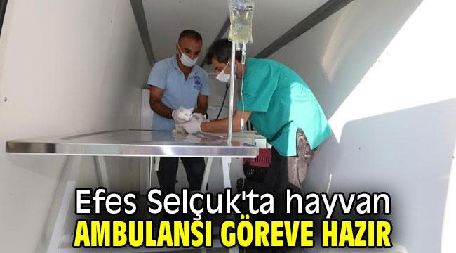 Efes Selçuk'ta hayvan ambulansı göreve hazır